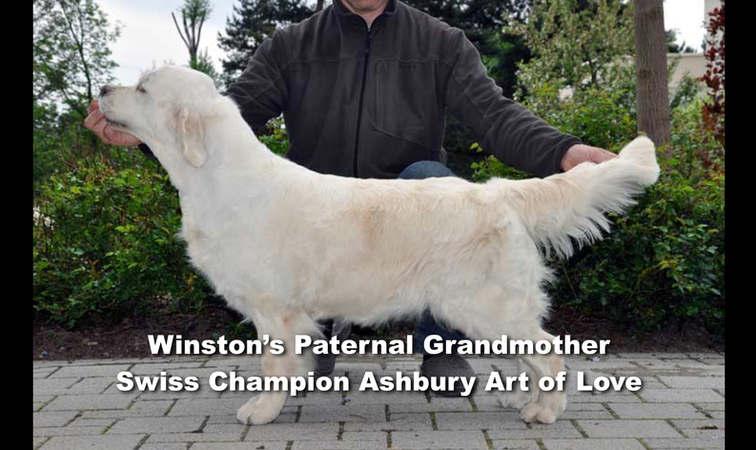 Winston-Pictoral Pedigree.001.jpeg