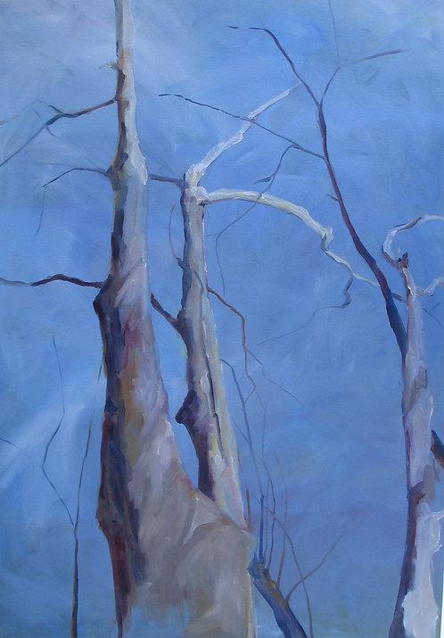 Cades Cove Tree (Sky Divisions)