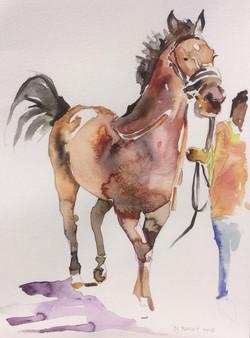 Horse Trot