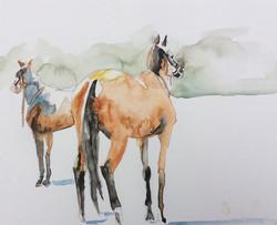Horses Watching