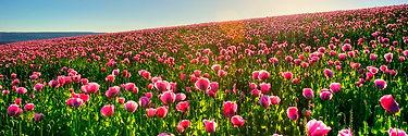 ост цветы !600х200.jpg