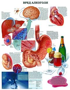 Вред алкоголя (80х105)!.jpg