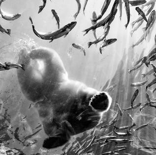 Polar Bear Snacks Columbus Zoo