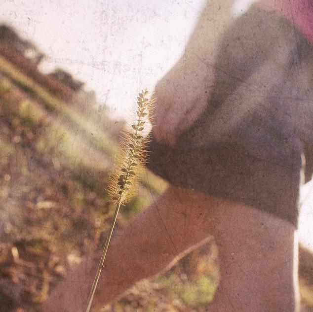 Corn field stroll