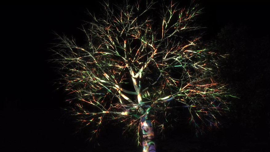 Tree projection Test