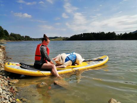 web - Dog paddle.jpg