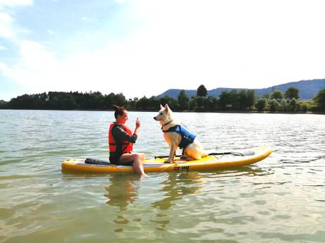 Website - Dog paddle.jpg