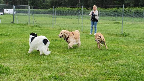 communication intra-canine