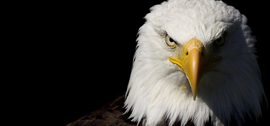 eagles financials.png