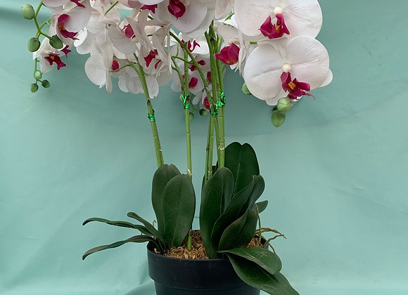 Large Permanent White Orchid
