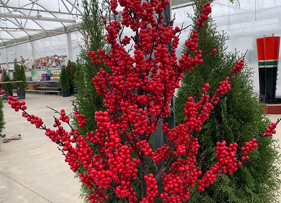 5' Berry Tree