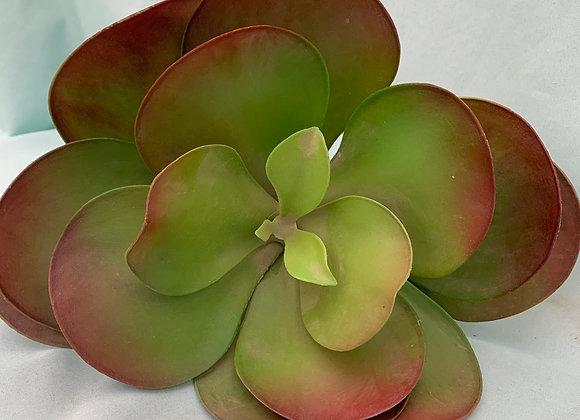 Large Permanent Succulent
