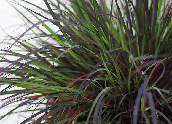 Grass - Blackhawks