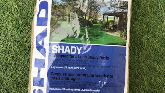 Shady Lawn Seed