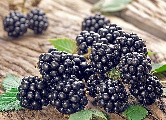 Blackberry - Chester Thornless