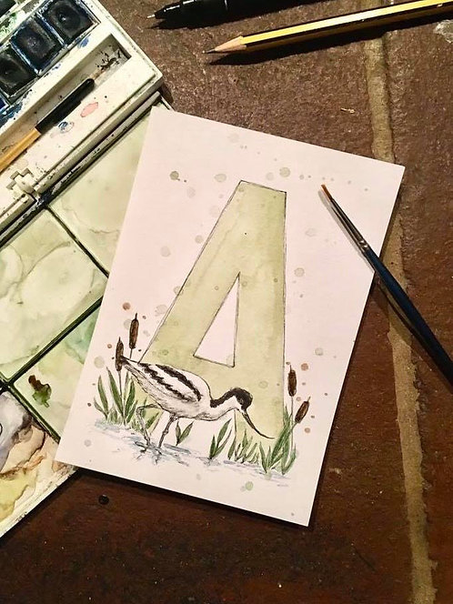 A is for Avocet | Original Ink & Watercolour