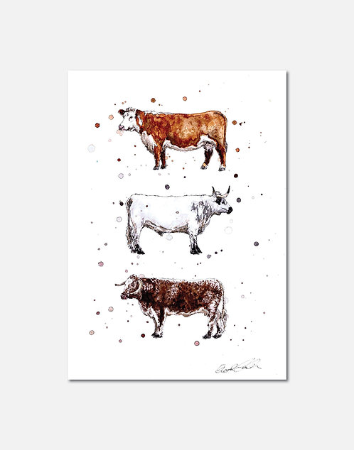Native Cattle Breeds | Signed Limited Edition Print