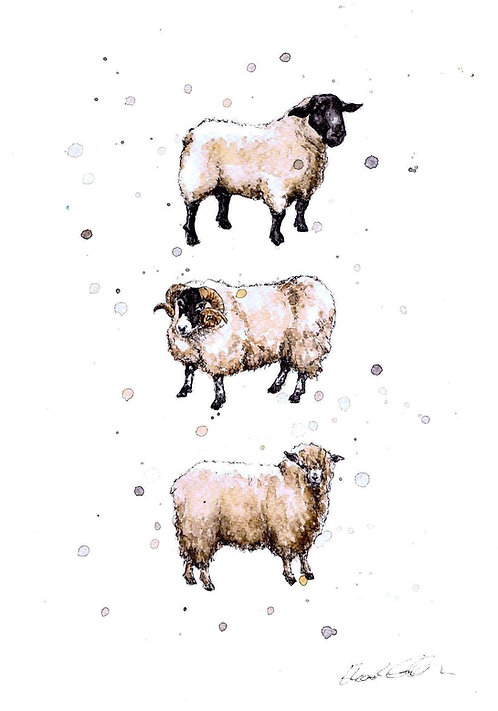 Native Sheep Breeds | Original Ink & Watercolour