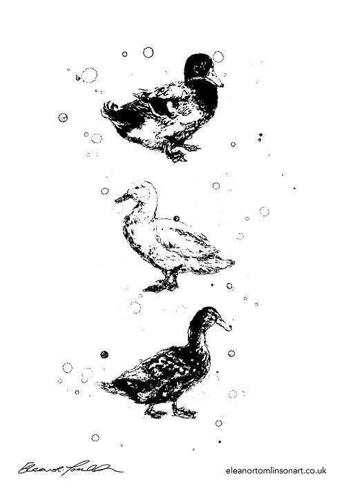 Ducks | Colour Me In