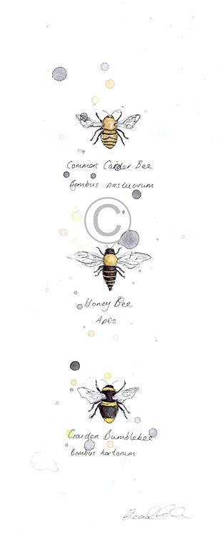 British Bees | Original Ink & Watercolour