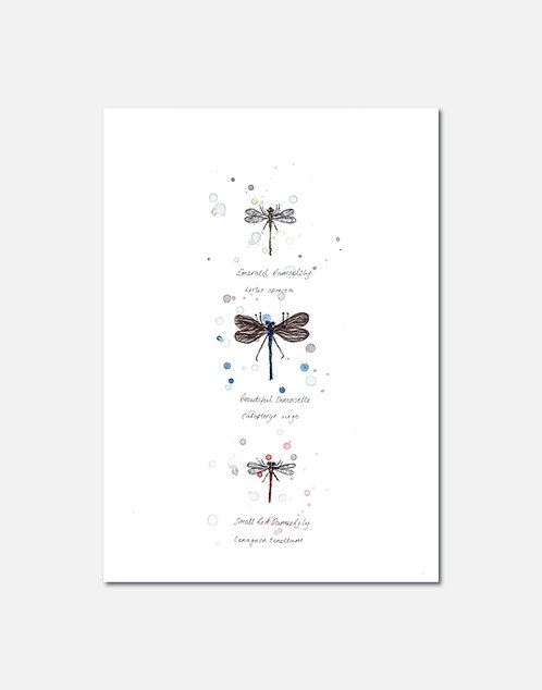 British Dragonflies | Signed Limited Edition Prints