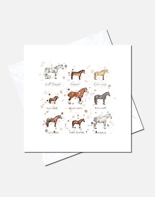 Horse Breeds | Card Design