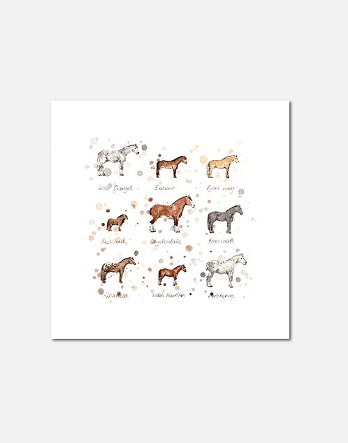 Horse Breeds | Signed Limited Edition Print