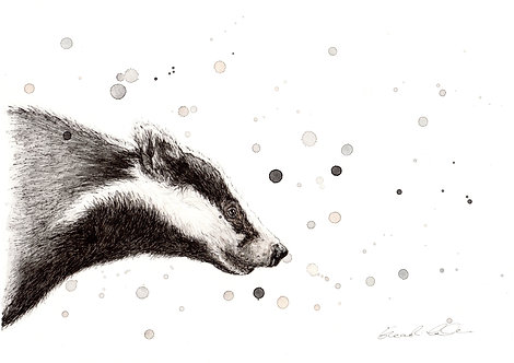 Badger | Original Ink & Watercolour
