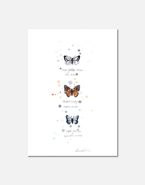 British Butterflies | Signed Limited Edition Prints