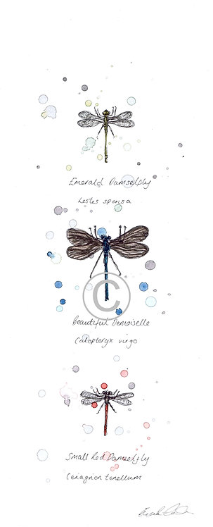 British Dragonflies | Original Ink & Watercolour | Mounted