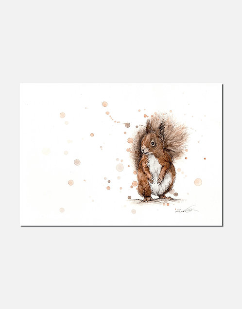 Red Squirrel | Signed Limited Edition Print