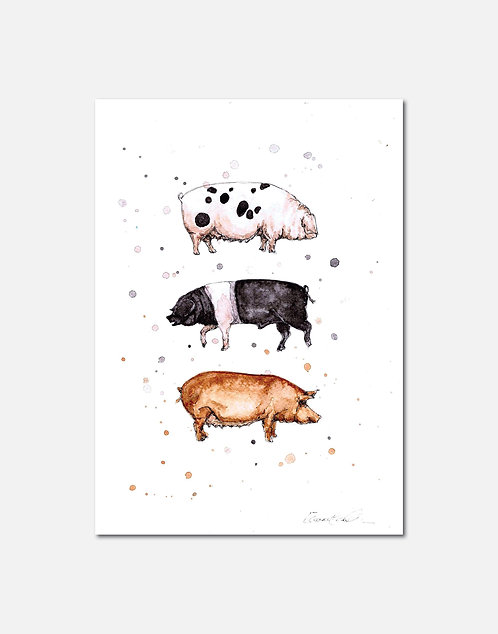 Native Pig Breeds | Signed Limited Edition Print