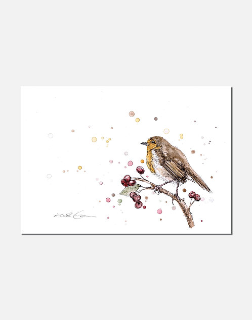 Robin Study | Signed Limited Edition Print