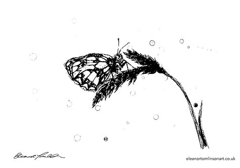Butterfly | Colour Me In