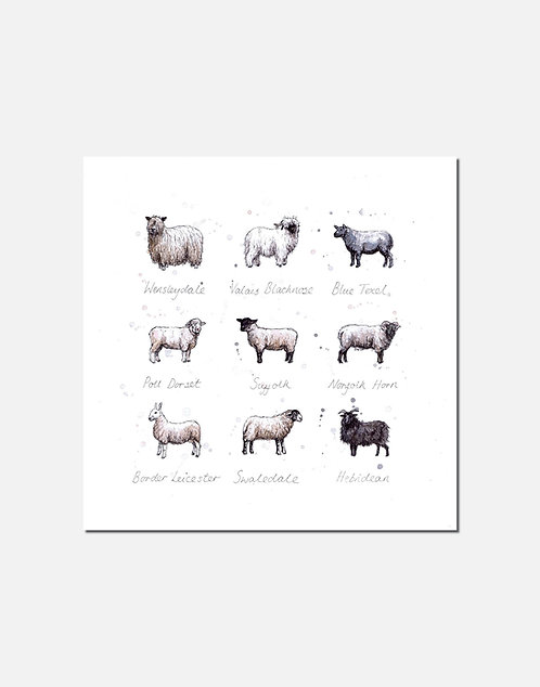 Baa | Signed Limited Edition Print