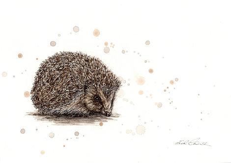 Tiggy-winkle| Original Ink & Watercolour