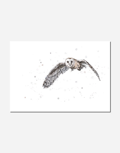 In Flight | Signed Limited Edition Print