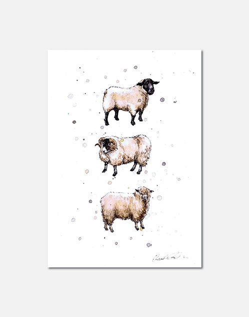 Native Sheep Breeds | Signed Limited Edition Print