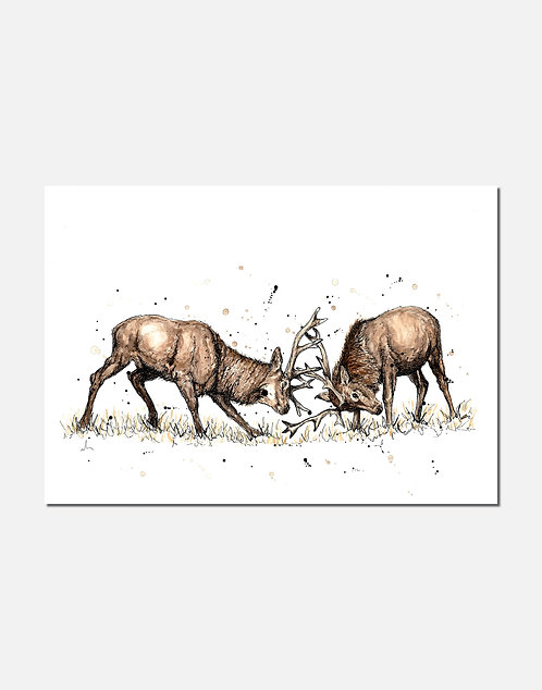 The Main Event | Signed Limited Edition Print