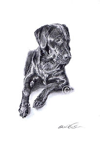 Black Labrador Drawing, Dog Portrait, Eleanor Tomlinson