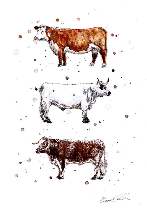 Native Cattle Breeds | Original Ink & Watercolour