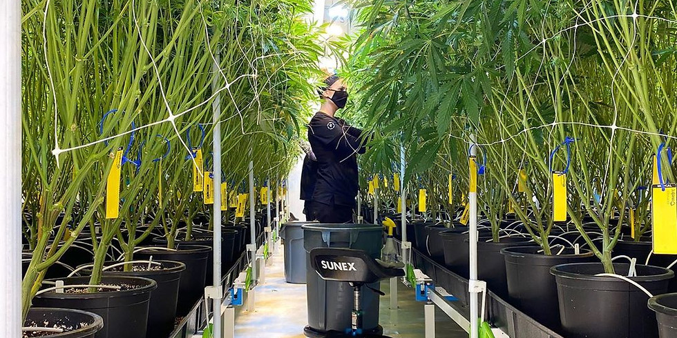 PG Group Cultivation Facility Tour 🌿