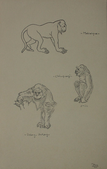 "Vintage Drawing - ""Macaque, Chimpanzee and Orangutan"" 1941 #7"