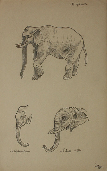 """""""Études d'Éléphants"""" - 1941 - Dessin Original #24"""