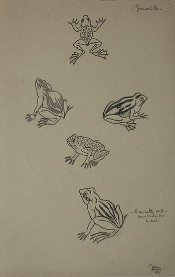 """Dessin Vintage - """"Étude de Grenouille"""" 1941 #9"""