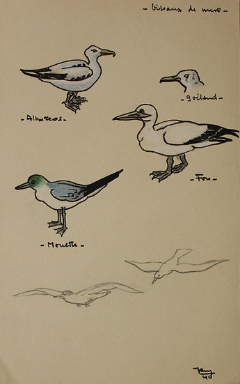 "Original Vintage Drawing - ""Studies of Seabirds"" 1940 #31"