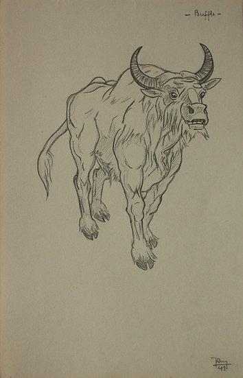 "Vintage Drawing - ""Buffalo Study"" 1941 #10"