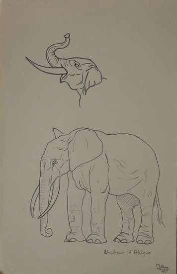 """Vintage Drawing - """"African Elephant Study"""" 1941 #2"""