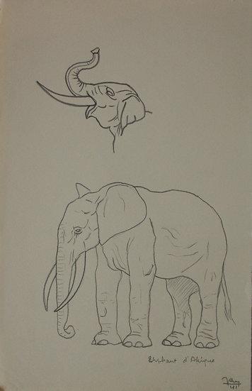 """Dessin Vintage - """"Étude d'Éléphant d'Afrique"""" 1941 #2"""