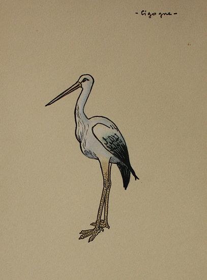 "Vintage Drawing - ""Stork"" Bird - 1940 #27"